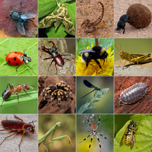 Image result for minibeasts photographs