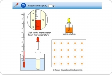 Breakdown of Starch by Amylase Experiment