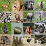 African Wildlife Activity Mat Product Link
